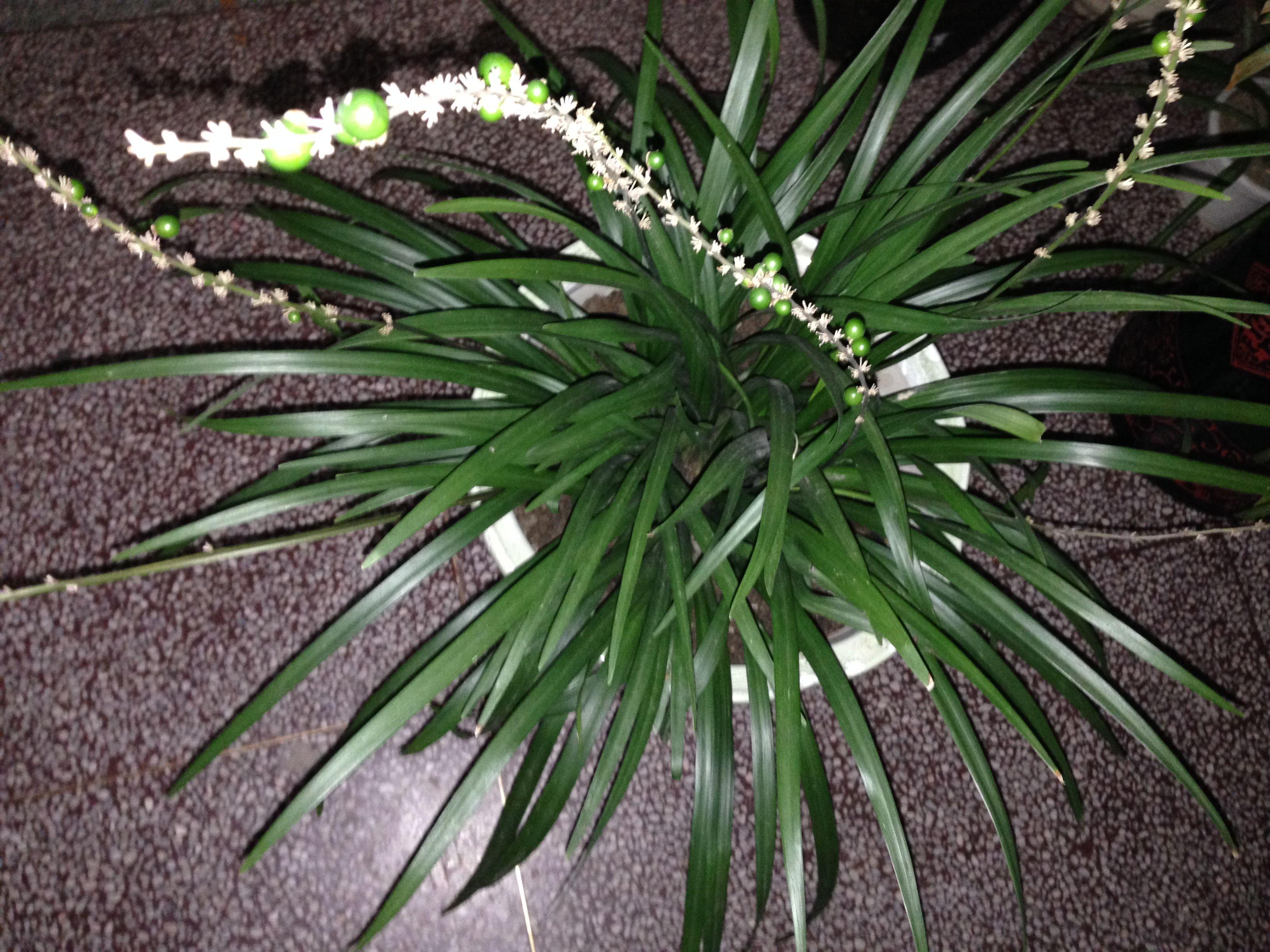 这两种植物是什么品种图片