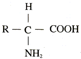 最简单氨基酸结构简式