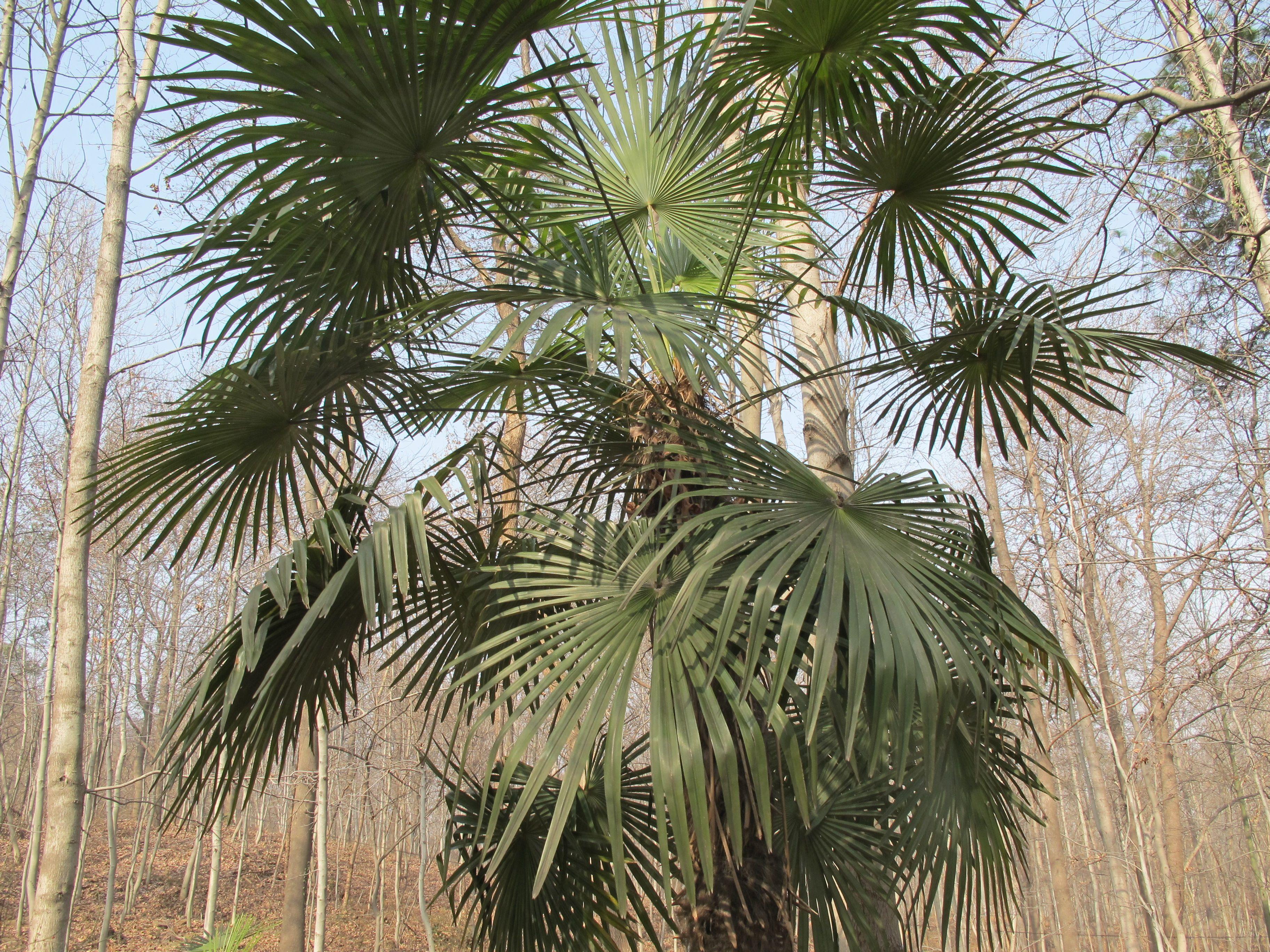 树的种类名称及图片 树的种类及名称 花的种类名称及图片
