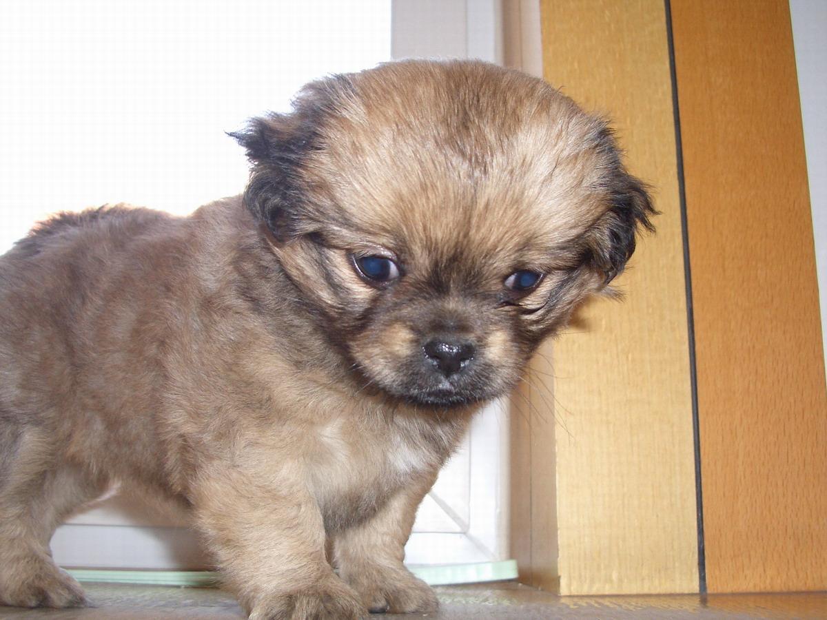 各种宠物狗的名字 各种宠物狗品种名字 各种宠物狗图片名字