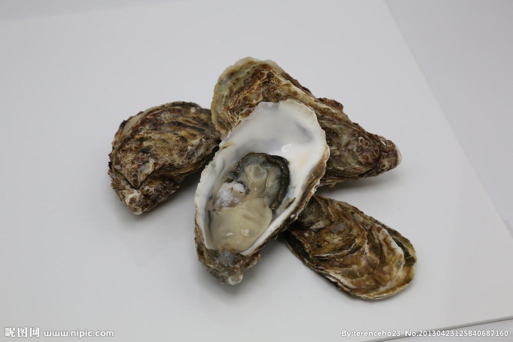 海边岩石上的附着贝壳