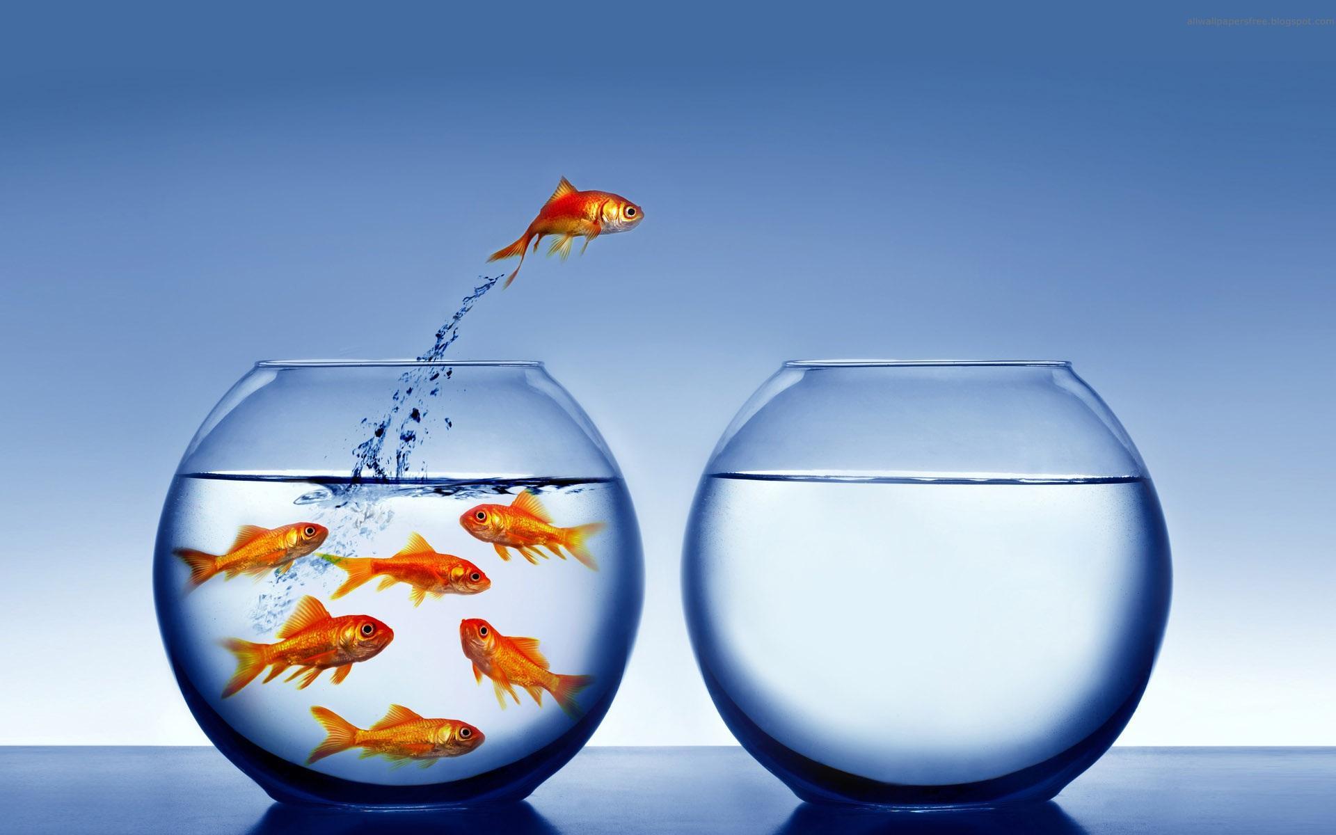 求桌面背景图片:鱼从一个鱼缸跳向另一个鱼缸