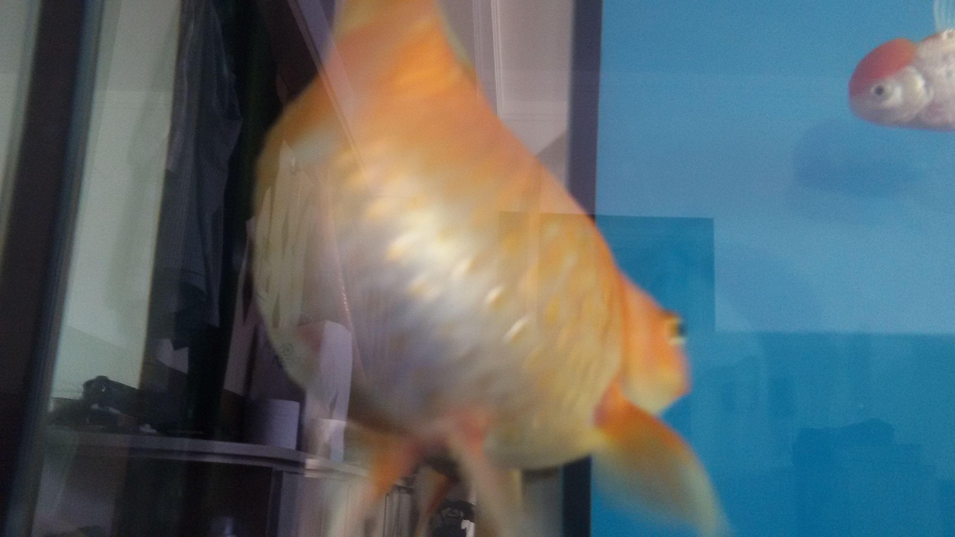 鲤鱼乡生子混蛋肚子