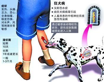 狂犬病球蛋白区别