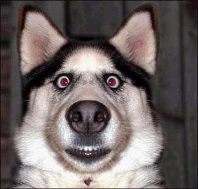 摸摸狗头表情包可爱