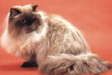 猫咪哮喘症状