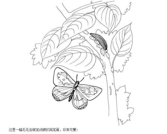 一张蝴蝶蛹的简笔画,是蛹! 要简单但要突出特点!图片
