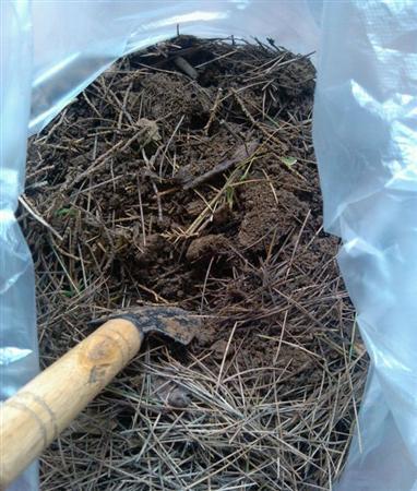 松针土怎么制作