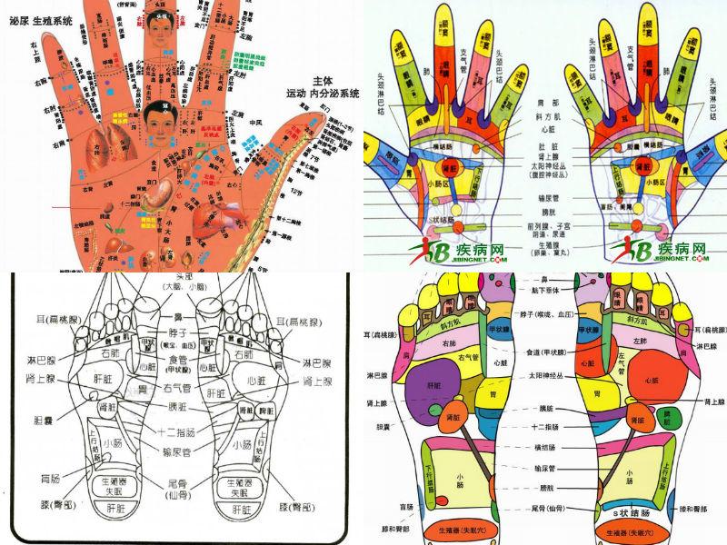 人体各脏器分布�_身体各器官出现病变会在反射区上有什么表现