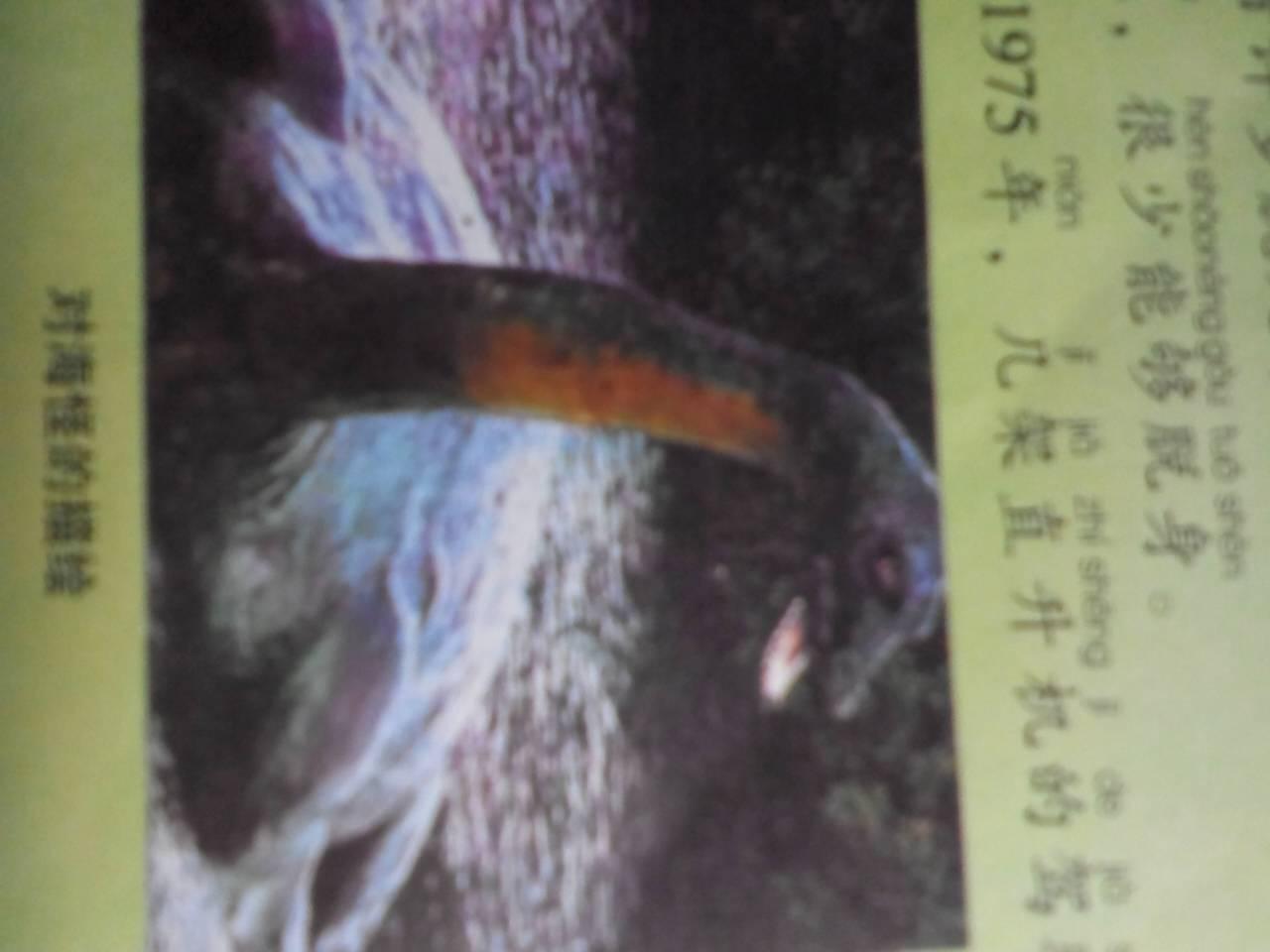 世界上有没有美人鱼 高清图片