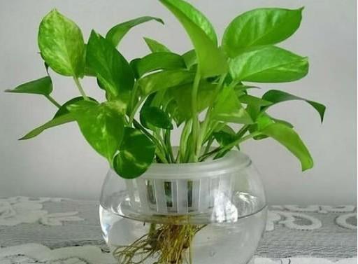最喜阴的小型植物