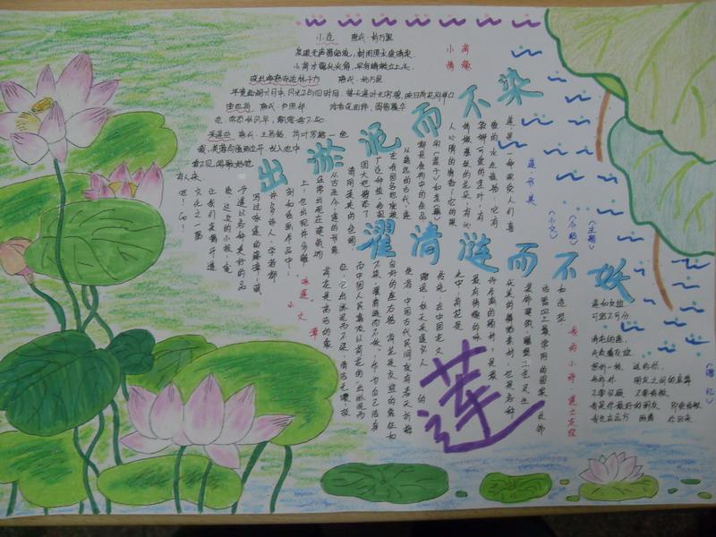 莲文化手抄报(原图,能看清字)图片
