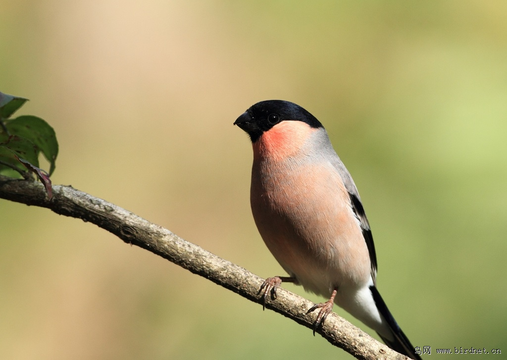 北方常见鸟类图片大全
