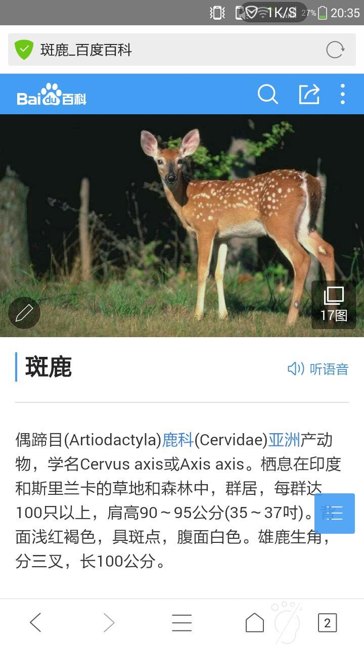 梅花鹿鹿的外貌和特点