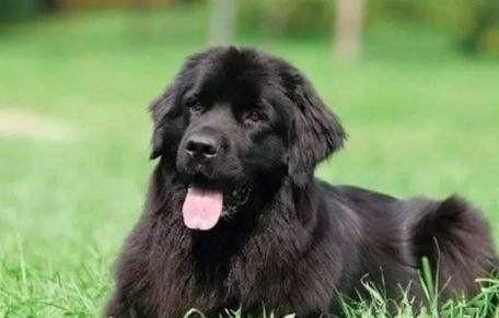 黑色的毛长的狗叫什么