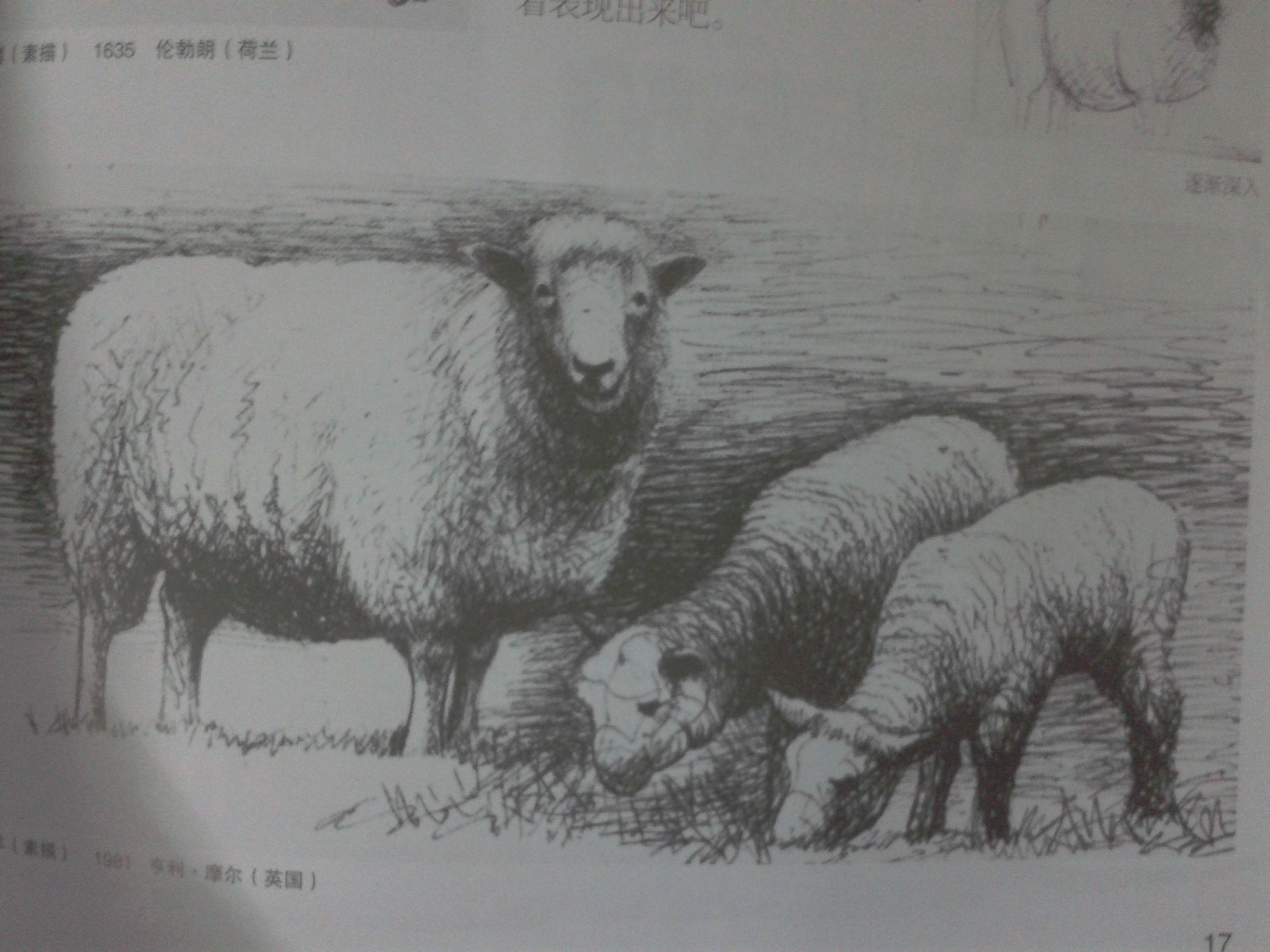 求图片!初一美术书(苏教版)上羊图片