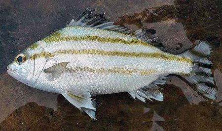 ??_周星馳電影《食神》中劉三師傅做的錦繡多味魚,那個奀