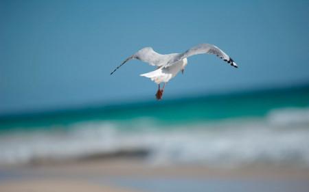 双鸟齐飞照片!美极了!(快看)