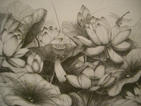 荷花铅笔画