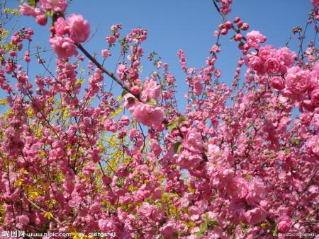描写春天的古诗十首图片