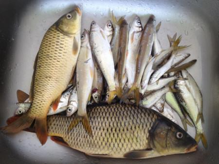 少种 鱼的做法大全 鱼的种类图片和名字
