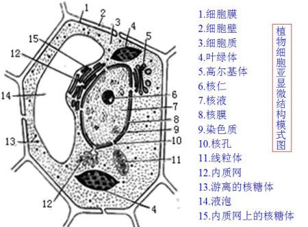 请据图回答问题 1 图示中,动物细胞所没有的结构是 .