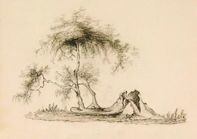 求一张铅笔画的苹果树图片