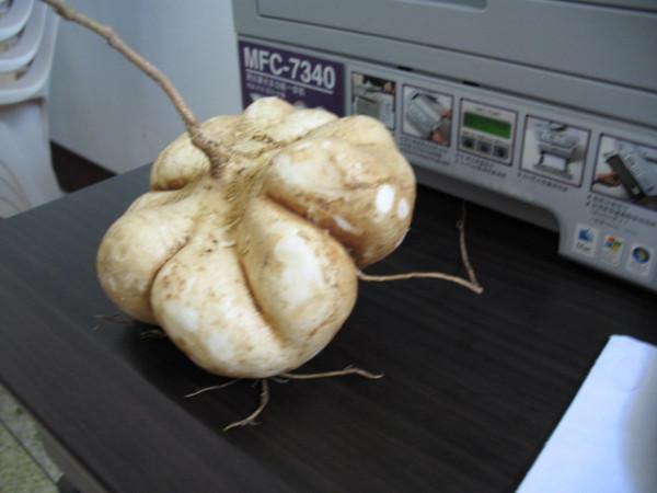 这种蔬菜叫什么名字