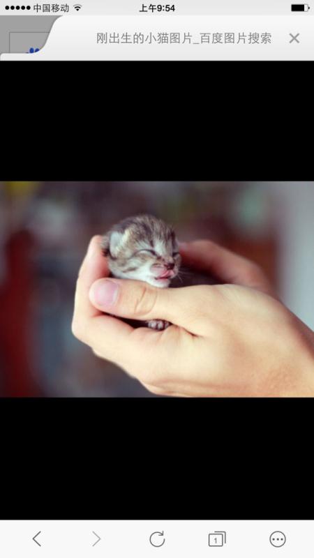 刚生出来的小猫图片