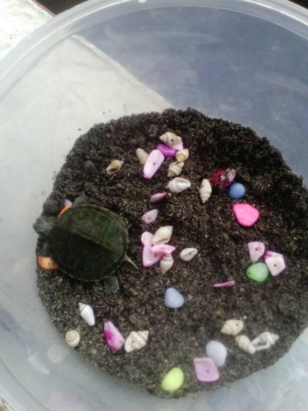 这样的小乌龟能冬眠吗 有沙,