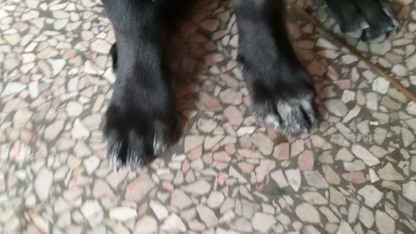 帮我看下小狗是什么品种