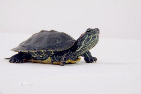 龟波性功图片