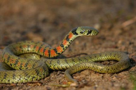 成人电影无播改fj9�dy��_谁知道这是什么蛇,有毒吗